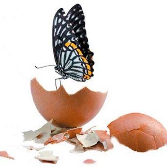 huevo-mariposa-1200